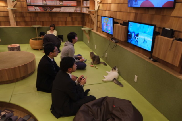 Cat coffee in Tokyo Akihabara Games Cats