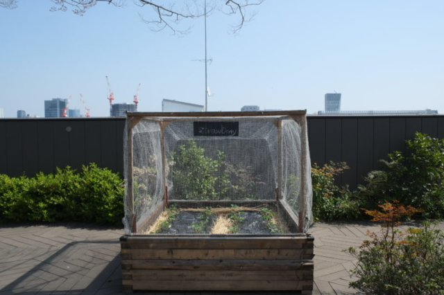 Strawberry ecology green cities tokyo mall roof